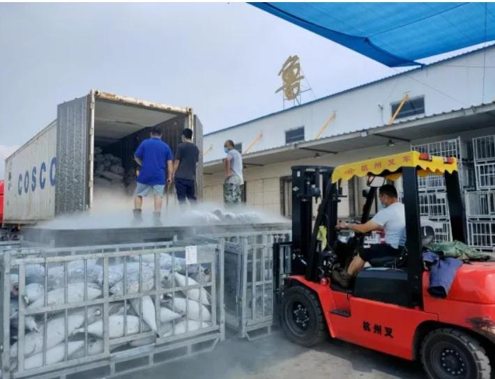 中鲁冷藏疫情期间完成上千吨卸船任务